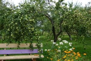 На нашем участке имеются плодоносные деревья.